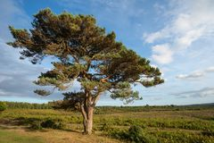 Stunning Summer sunset landscape image of Bratley View in New Fo. Beautiful Summer sunset landscape image of Bratley View in New Forest National Park England Royalty Free Stock Photography