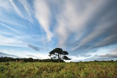 Stunning Summer sunset landscape image of Bratley View in New Fo. Beautiful Summer sunset landscape image of Bratley View in New Forest National Park England Stock Photography