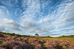 Stunning Summer sunset landscape image of Bratley View in New Fo. Beautiful Summer sunset landscape image of Bratley View in New Forest National Park England Royalty Free Stock Images
