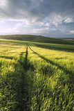 Beautiful Summer sunset landscape Steyning Bowl on South Downs Stock Images