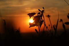 Magical end of the sunny day in beautiful nature. A beautiful summer sunset in nature was created in 2018 on a holiday in the Czech Republic to Hora Matky Bozi stock images