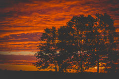 Beautiful Summer Sunset over the tree silhouette Stock Photo