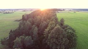Beautiful summer sunset. Road / alley. Green fields and forest. Aerial footage. stock footage