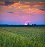 Beautiful summer sunset in the village Stock Image