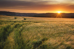 Beautiful Summer vibrant sunset landscape over agricultural crop Royalty Free Stock Photo