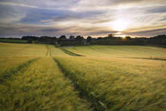 Beautiful Summer vibrant sunset landscape over agricultural crop Stock Images