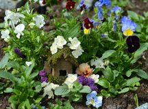 Small fairy house in viola flowerbed Stock Photography