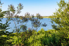 Beautiful summer water landscape with tree branches Stock Photography