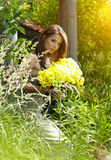 Beautiful summer woman Royalty Free Stock Image