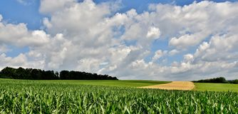 Beautiful Summers Day. Landscape with fields and blue sky on a summers day Stock Photo