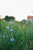Beautiful Summers Garden Royalty Free Stock Photo