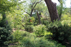 Beautiful Summertime Woods. The woods at the Albuquerque zoo are wonderful in the summertime Royalty Free Stock Photos