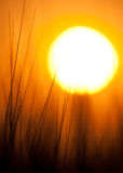 Beautiful Sun Stock Photo