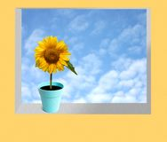 Beautiful sun flower on a window Stock Photo
