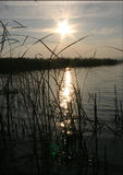 Beautiful sun glare in the reeds on the water in the lake Stock Photo