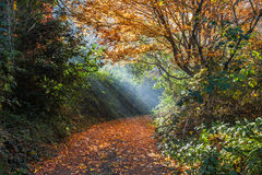 Beautiful sun rays falling on a golden empty footpath Royalty Free Stock Images