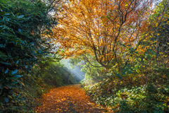 Beautiful sun rays falling on a golden footpath Stock Photo