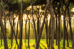 Beautiful sun rays in the morning forest Stock Photo