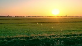 Beautiful sun rising sky over green agricultural field