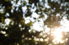 Beautiful Sun shine through the blowing on wind tree stock video footage