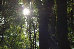 Beautiful sunbeam in tropical rainforest in Kew Mae Pan , Chaing Mai , Thailand.  Royalty Free Stock Photos