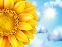 Beautiful sunflower against blue sky. EPS 10 Royalty Free Stock Photography