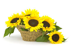 Beautiful sunflower bouquet in a basket Royalty Free Stock Images