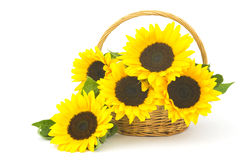 Beautiful sunflower bouquet in a basket Stock Photography