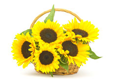 Beautiful sunflower bouquet in a basket Stock Images
