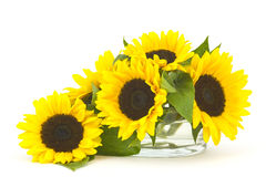 Beautiful sunflower bouquet in glass vase Stock Images