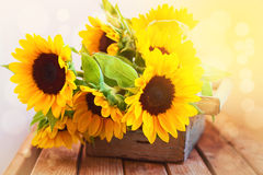 Beautiful sunflower bouquet in wooden box Royalty Free Stock Images