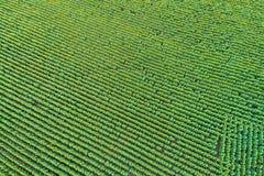 Free Beautiful Sunflower Field In Summer Stock Photo - 94333210