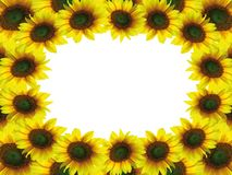 Beautiful sunflower frame Royalty Free Stock Photography