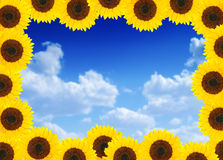Beautiful sunflower frame Stock Photo