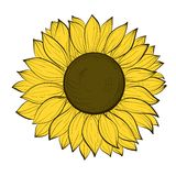 Beautiful sunflower isolated on a white background Royalty Free Stock Images