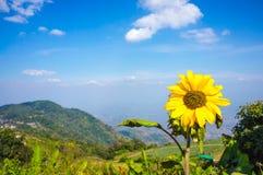 Beautiful sunflower on nature background. Blue sky above mountain peak. . Beautiful sunflower on nature background. Blue sky with clouds and bright sun lights stock photo