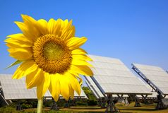 Beautiful sunflower and solar panel and power plan royalty free stock images