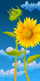 Beautiful sunflowers. With blue sky Royalty Free Stock Photography