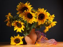 Beautiful Sunflowers in ceramic  jar Stock Photos