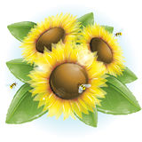 Beautiful sunflowers and green leaves Stock Photography
