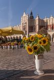 Beautiful sunflowers and other flowers on sale in the main market square in Krakow, Poland stock photo