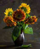 Beautiful sunflowers Royalty Free Stock Images