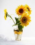 Beautiful sunflowers in a vase Stock Images