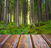 Beautiful sunlight in the autumn forest and wood planks floor Stock Photo