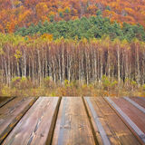 Beautiful sunlight in the autumn forest and wooden planks floor Stock Images