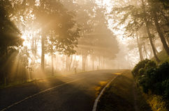 Beautiful sunlight   in forest Royalty Free Stock Image
