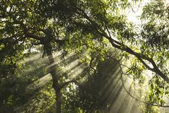 Beautiful sunlight rays shining through the trees.  royalty free stock photography