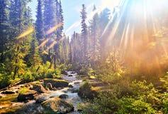 Beautiful sunlight in Siberian mountain forest stock photo