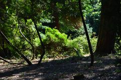 Beautiful sunlit greens in the forest royalty free stock images