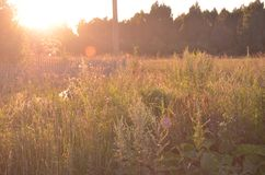 Beautiful Sunlit meadow. Summer evening. Outdoor view. Park, forest, trees. Art photo for poster print royalty free stock photo